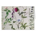 Ocho estudios de flores salvajes tarjeta de felicitación