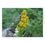 Ochoco Black Canyon Flora Flower Botany Wildflower Greeting Card