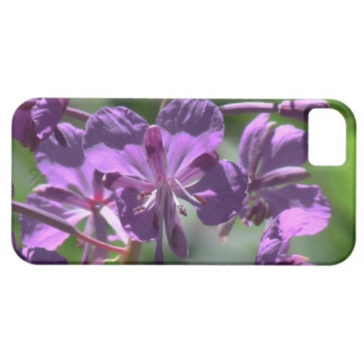 Ochoco Black Canyon Flora Flower Botany Wildflower iPhone 5 Cases