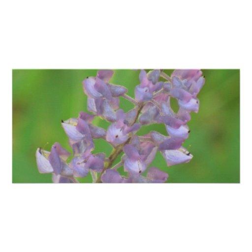 Ochoco Black Canyon Flora Flower Botany Wildflower Photo Card