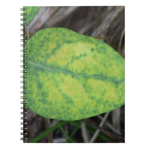 Ochoco Black Canyon Flora Plants Botany Biota Spiral Note Book