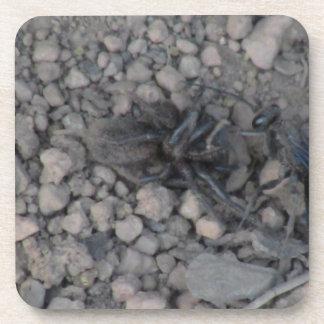 Ochoco Black Canyon Insects / Arachnids Bugs Fauna Beverage Coaster