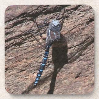 Ochoco Black Canyon Insects / Arachnids Bugs Fauna Coaster