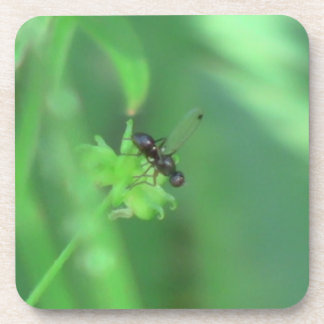 Ochoco Black Canyon Insects / Arachnids Bugs Fauna Drink Coaster