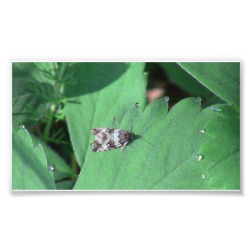 Ochoco Black Canyon Insects / Arachnids Bugs Fauna Photographic Print