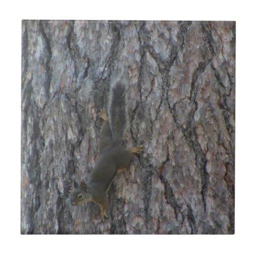 Ochoco Black Canyon Mammal Animal Squirrel Tiles