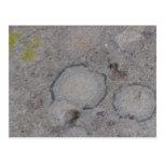 Ochoco Black Canyon Mushroom Fungi Lichen Mosses Postcard