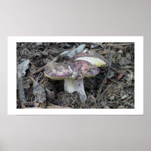 Ochoco Black Canyon Mushroom Fungi Lichen Mosses Print