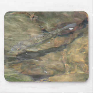 Ochoco Black Canyon Oregon Aquatic Flora Fauna Mouse Pad