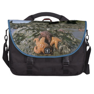 Ochre Seastars Pisaster ochraceous) Shi-Shi Laptop Bag