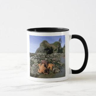 Ochre Seastars Pisaster ochraceous) Shi-Shi Mug