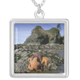 Ochre Seastars Pisaster ochraceous) Shi-Shi Silver Plated Necklace