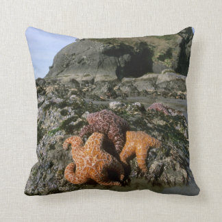Ochre Seastars Pisaster ochraceous) Shi-Shi Throw Pillow