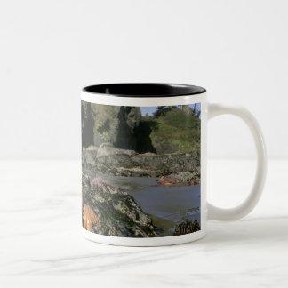 Ochre Seastars Pisaster ochraceous) Shi-Shi Two-Tone Coffee Mug