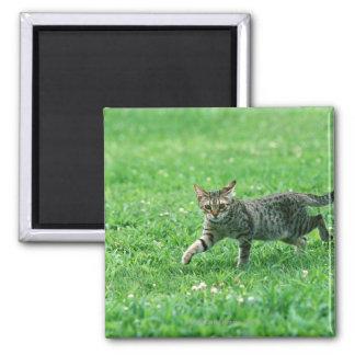 Ocicat 2 Inch Square Magnet