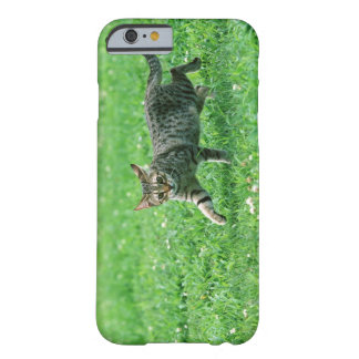 Ocicat Barely There iPhone 6 Case