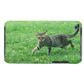 Ocicat Case-Mate iPod Touch Case