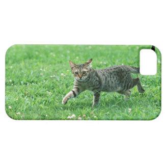 Ocicat iPhone SE/5/5s Case