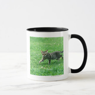 Ocicat Mug