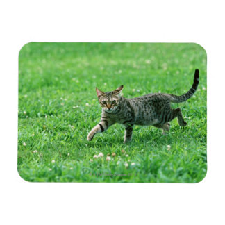 Ocicat Rectangular Photo Magnet
