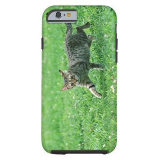 Ocicat Tough iPhone 6 Case