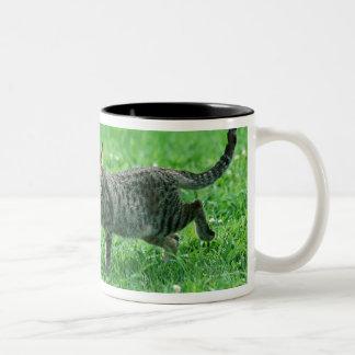 Ocicat Two-Tone Coffee Mug