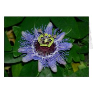Ocoee flower Passiflora caerulea Passion flower Card