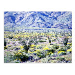 Ocotillo And Desert Flowers In Bloom Post Card