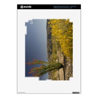 Ocotillo and desert senna decal for iPad 3