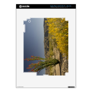 Ocotillo and desert senna decals for iPad 3