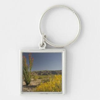 Ocotillo and desert senna keychain