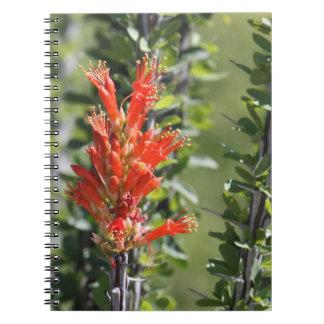 Ocotillo en cuaderno de la floración