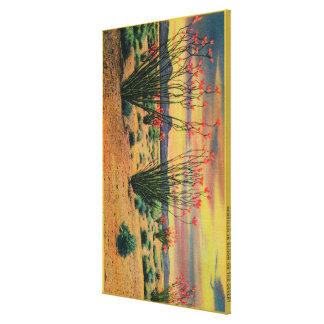 Ocotillo Flowers in Bloom, California DesertStat Canvas Print