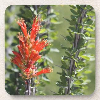 Ocotillo in Bloom Coasters