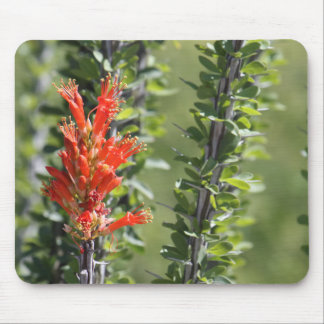 Ocotillo in Bloom Mouse Pad