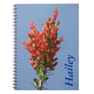 Ocotillo Plant Journal