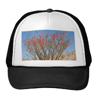 Ocotillo Trucker Hat