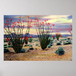 Ocotillos del desierto de Arizona en la floración Poster