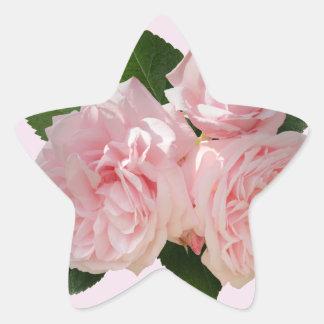 Octavia Hill de los rosas rosados Pegatina En Forma De Estrella
