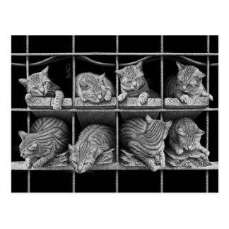 Octeto de los gatos tarjetas postales