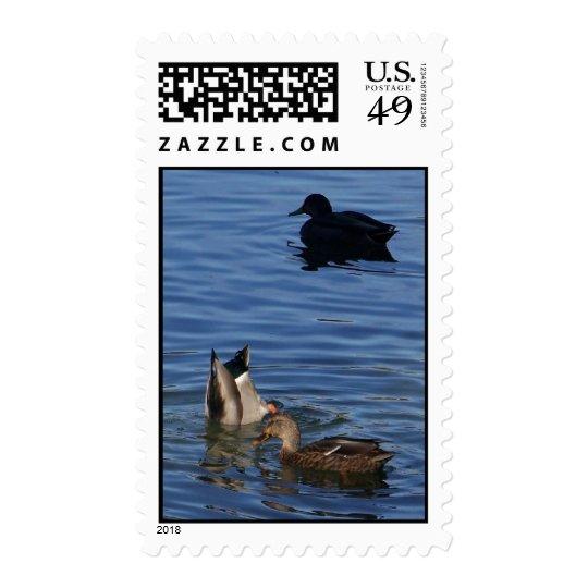 October Ducks  Postage
