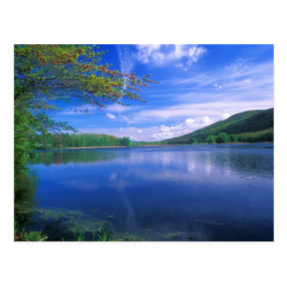 October Mountain State Forest Berkshires Postcard