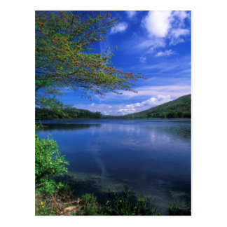 October Mountain State Forest Pond Postcard