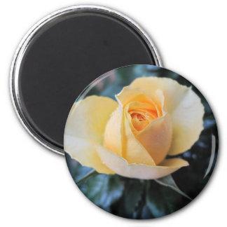 October Rose Magnet