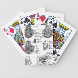 Octopus Anatomy Bicycle Playing Cards