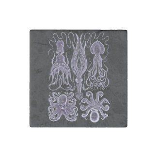 Octopus and Squid by Haeckel Stone Magnet