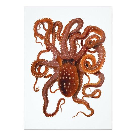 Octopus Macropus Atlantic White Spotted Octopus Card