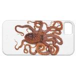 Octopus Macropus Atlantic White Spotted Octopus iPhone 5 Case