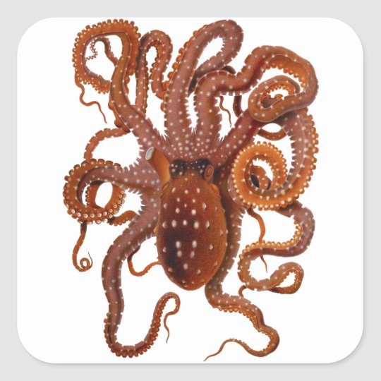 Octopus Macropus Atlantic White Spotted Octopus Square Sticker