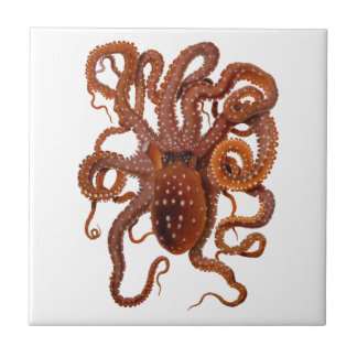 Octopus Macropus Atlantic White Spotted Octopus Tile